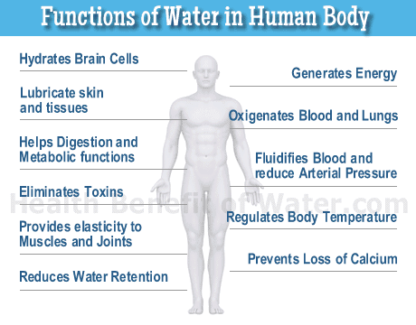 functions-of-water-in-human-body
